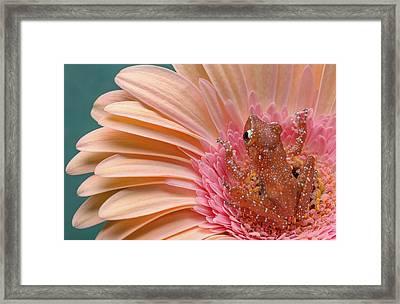 In The Pink Framed Print by Cheryl Schneider