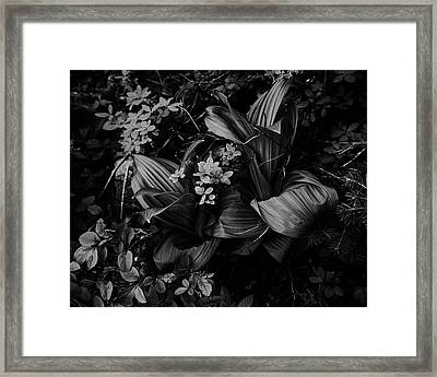 Framed Print featuring the photograph Indian Hellebore 3 by Trever Miller