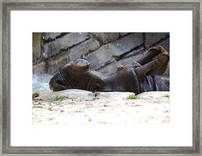 Indian Rhinoceros Framed Print by Thea Wolff