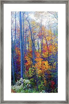 Indiana Autumn Woods Image Framed Print by Paul Price