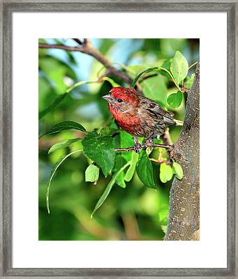 Inquisitive Framed Print by Betty LaRue