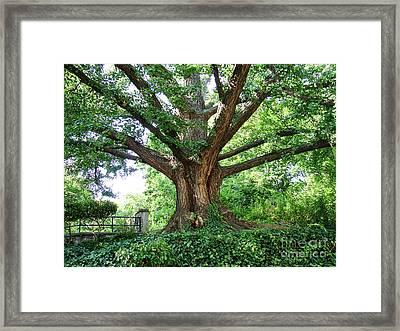 Inwood Ginkgo  Framed Print