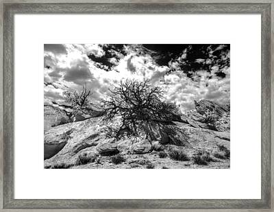 90270 Escalante Tree On Rock Framed Print