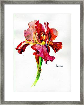 Iris Framed Print by Jimmie Trotter