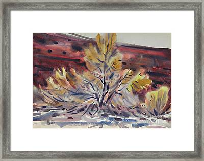 Ironwood Framed Print by Donald Maier