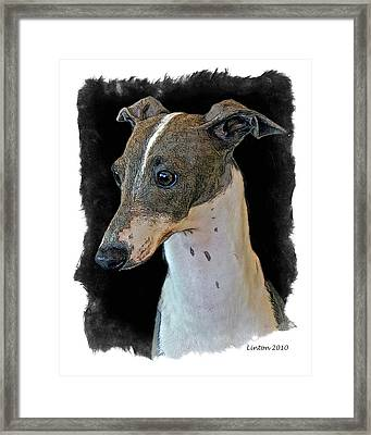 Italian Greyhound Framed Print by Larry Linton