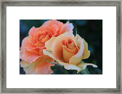 Jacob Framed Print by Marna Edwards Flavell