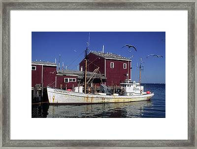 Jacob Pike Fishing Boat In Maine Framed Print by Carl Purcell