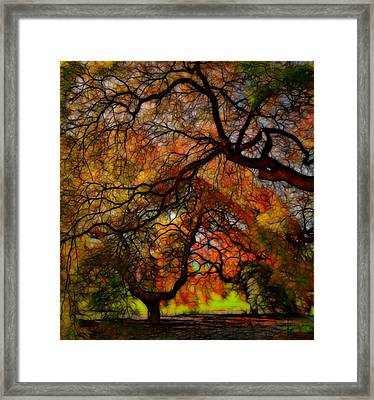 Japanese Maples 2 Framed Print