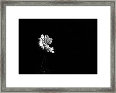 Japanese Anemone In Black And White Framed Print by Brooke T Ryan