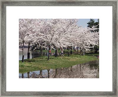 Japanese Cherry Blossom Trees Framed Print by April Sims