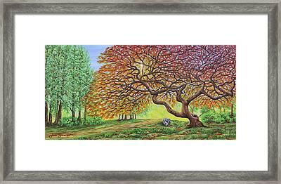 Japanese Maple Framed Print by Jane Girardot