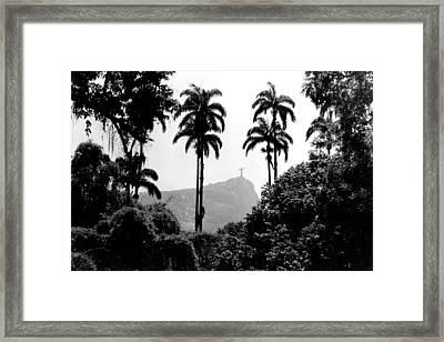 Jardim Botanico - Rio De Janeiro Framed Print by Eduardo Costa