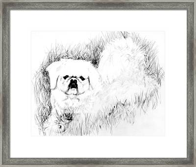 Jasper Framed Print by Carliss Mora