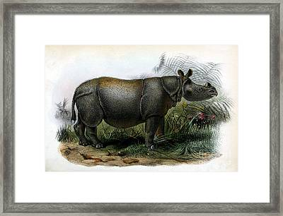 Javan Rhinoceros, Endangered Species Framed Print