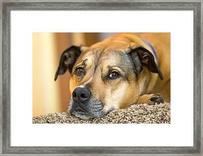 Jessie Relaxing Framed Print