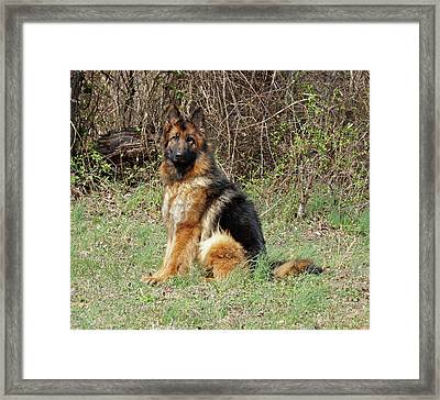Framed Print featuring the photograph Jessy by Sandy Keeton