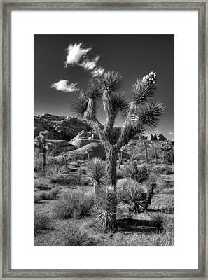 Joshua Tree And Cloud Framed Print by Peter Tellone