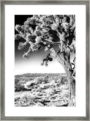 Joshua Tree At Mojave National Preserve In Black And White Framed Print