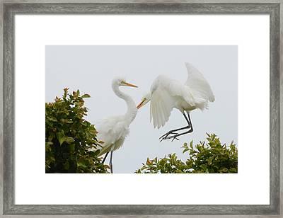 Jump Framed Print by Fraida Gutovich