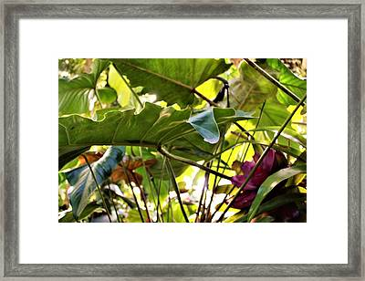 Framed Print featuring the photograph Jungle Jive by Mindy Newman