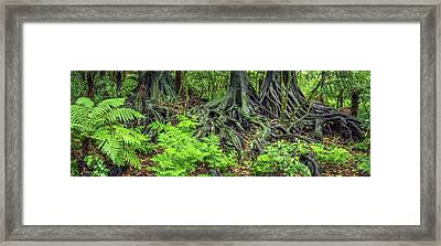 Framed Print featuring the photograph Jungle Roots by Les Cunliffe