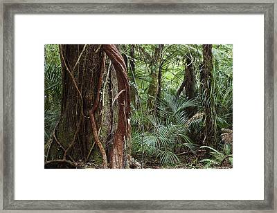 Jungle Vines Framed Print by Les Cunliffe