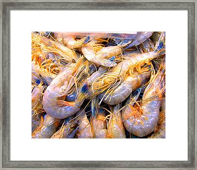 Just Caught Shrimp Framed Print by Merton Allen