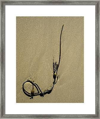 Framed Print featuring the photograph Kelp 1 by Art Shimamura