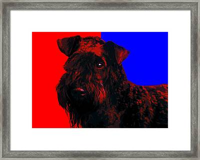 Kerry Blue Terrier Framed Print by Alexey Bazhan