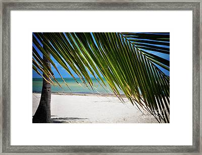 Framed Print featuring the photograph Key West Palm by Kelly Wade