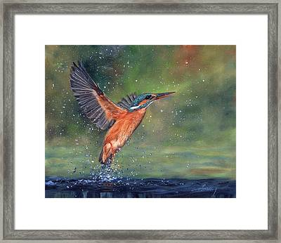 Framed Print featuring the painting Kingfisher by David Stribbling