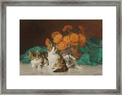 Kitten Framed Print by Daniel Merlin