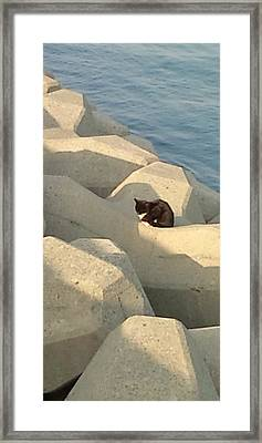 Koneko Means A Kitten. Framed Print