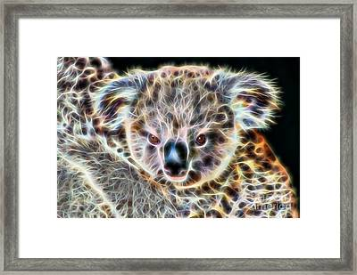 Koala Bear Framed Print by Marvin Blaine