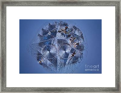 Lactose Monohydrate, Lm Framed Print