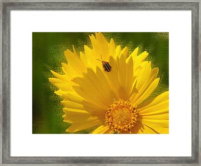 Lady Bug Lookout Framed Print by Paul Anderson