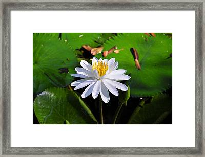 Lady Of The Lake Framed Print by David Lee Thompson