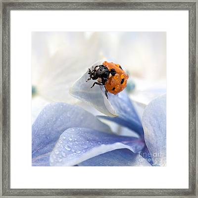 Ladybug Framed Print by Nailia Schwarz