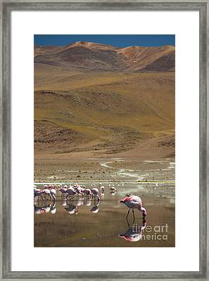 Laguna Colorada, Andes, Bolivia Framed Print