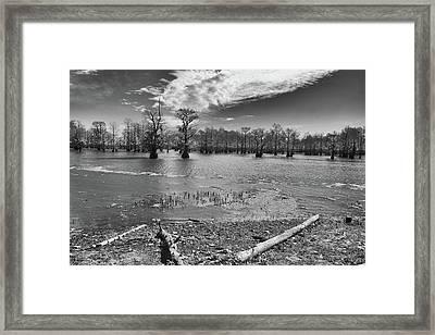 Lake Bistineau  Framed Print by Jim Cook