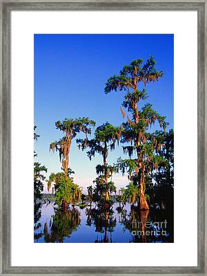 Lake Martin Cypress Swamp Framed Print by Thomas R Fletcher