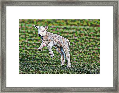 Lamb Collection Framed Print
