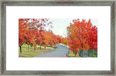 Framed Print featuring the photograph Last Days Of Autumn by AJ Schibig