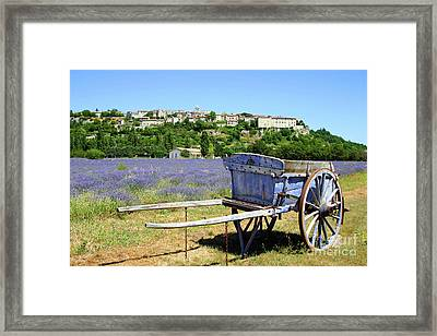 Lavender Field In Provence Framed Print