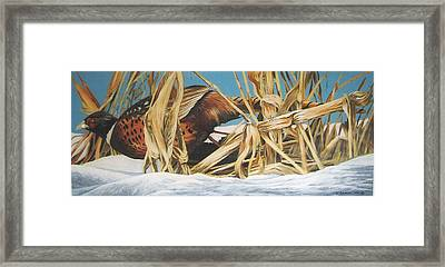 Layin' Low Framed Print by Steve Greco