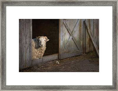 Framed Print featuring the photograph Freckles And Friend by Robin-Lee Vieira