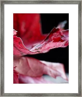 Leaf Study V Framed Print by Lauren Radke