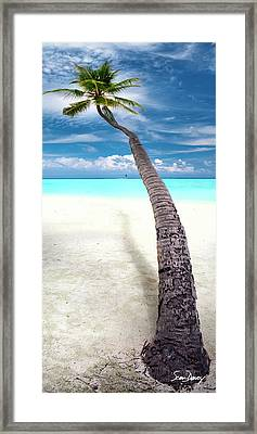 Leaning Palm Framed Print by Sean Davey