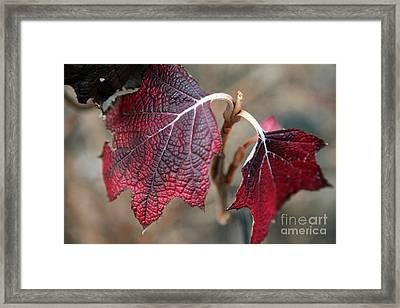 Leaves Framed Print by Amanda Barcon